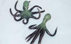 Octopus pair