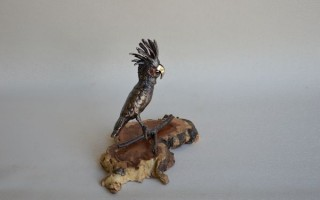 Palm Cockatoo on burl